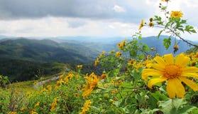 Berglagersikten med guling blommar i nordligt av Thailand Royaltyfria Bilder