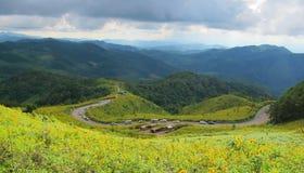 Berglagersikten med guling blommar i nordligt av Thailand Royaltyfri Foto