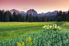 Berglandschaft stockfotos