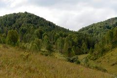 Berglandschaft in der Nähe von dem Gebiet taiga Dorf Generalka Altai in West-Sibirien lizenzfreie stockfotos