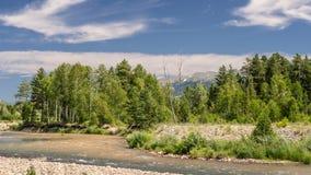 Berglandschaft an einem sonnigen Sommertag Blauer Himmel, weiße Wolken, Fluss-Spritzen, fließend über Felsen, Evergreens und Bäum lizenzfreie stockfotografie