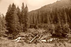 Berglandschaft im Sepia Lizenzfreie Stockbilder