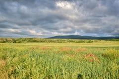 Berglandschaft im Sommertalgrün mit Blumen Lizenzfreie Stockfotos