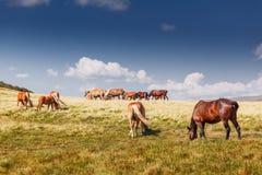 Berglandschaft mit dem Weiden lassen von Pferden und von Wolken Stockbilder