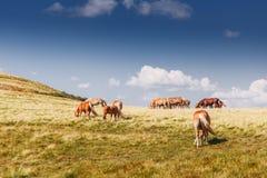 Berglandschaft mit dem Weiden lassen von Pferden und von Wolken Stockfotos