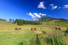 Berglandschaft mit dem Weiden lassen von Tieren Lizenzfreies Stockbild