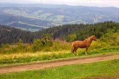Berglandschaft mit einem Pferd in der Front lizenzfreie stockfotografie