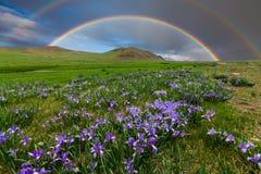 Berglandschaft mit einem Regenbogen über Blumen Stockbild