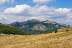 Berglandschaft mit gelben Weiden und grünen dreieckigen Mustern des Waldes Balkan Montenegro, Krnovo Lizenzfreie Stockbilder