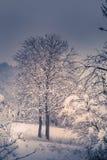 Berglandschaft mit Schnee, Schnee bedeckte Bäume Stockbild