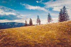 Berglandschaft mit Wald und blauem Himmel Lizenzfreie Stockfotografie
