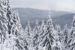 Berglandschaft mit weißen Tannenbäumen Stockfotos