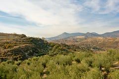 Berglandschaft Sierre Nevada mit Olivenbäumen unter einem blauen Himmel mit weichen Wolken Lizenzfreie Stockbilder