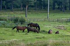 Berglandschaft und wilde Pferde in Rila-Berg Lizenzfreie Stockfotos
