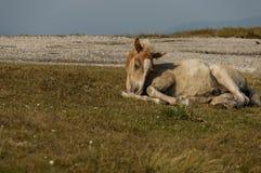 Berglandschaft und wilder Coltpferde-Rest in Mittel-Balkan, Stara-planina, in Beklemeto oder im Trojan Durchlauf Stockbilder