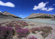 Berglandschap. Canadese Rotsachtige Bergen. Jasper National Park, Alberta, Canada stock foto's