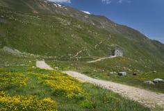Berglandschap in de Alpen met bloemen bij Pforzheimer-Hut, Oostenrijk stock foto