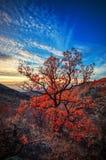 Berglandschap en de herfstboom royalty-vrije stock foto's