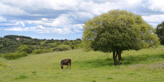 Berglandschap - Groene aarde - panorama Royalty-vrije Stock Afbeeldingen