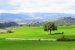 Berglandschap - Groene aarde - panorama Stock Afbeelding