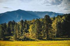 Berglandschap met bos Stock Fotografie
