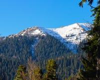 Berglandschap met kleurrijke bos en hoge snow-capped pieken van de de bergen mooie verbazende dag van de Kaukasus Stock Afbeelding