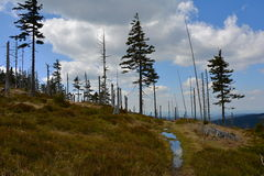 Berglandschap met Nette Bomen, Tsjechische Republiek, Europa Stock Afbeelding