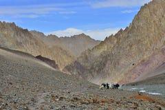 Berglandschap met paarden en ruiter stock foto
