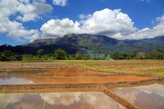 Berglandschap met rijstaanplanting in Sri Lanka Royalty-vrije Stock Foto's