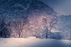Berglandschap met sneeuw, sneeuw behandelde bomen Stock Foto
