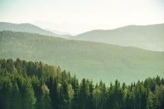 Berglandschap met sparren en pijnboombomen in de Oostenrijkse Alpen tijdens een heldere zonnige dag in de Wintertijd stock afbeeldingen