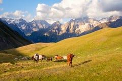 Berglandschap met wild paarden in het nationale park van Svaneti, Georgië Royalty-vrije Stock Afbeelding