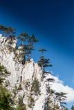 Berglandschap met zwarte pijnboombomen Royalty-vrije Stock Foto