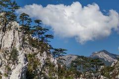 Berglandschap met zwarte pijnboombomen Stock Foto
