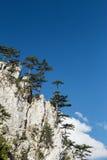 Berglandschap met zwarte pijnboombomen Stock Afbeelding