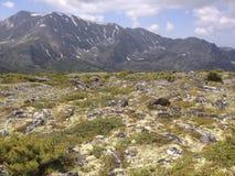 Berglandschap van alpiene weiden Barguzinsky Ridge Lake Baikal Royalty-vrije Stock Foto