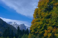 Berglandschap van de gouden herfst Royalty-vrije Stock Foto's
