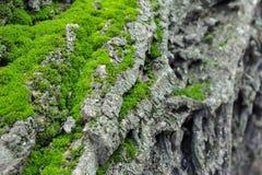 Berglandschap van groen mos op een boom Stock Afbeeldingen