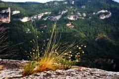 Berglandschappen in de ochtend stock foto's