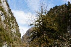 Berglandskap, Abchazien Arkivfoton