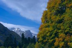Berglandskap av den guld- hösten Royaltyfria Foton