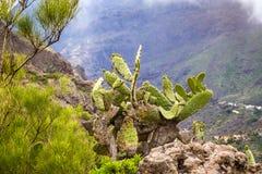 Berglandskap av den Masca klyftan Härliga sikter av Co Arkivfoton