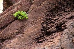 Berglandskap av klyftamaskaen Fotografering för Bildbyråer