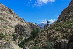 Berglandskap, Corse, Frankrike Royaltyfria Bilder