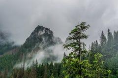 Berglandskap, dal, skog med gröna träd och härlig blå himmel med moln arkivbild