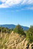 Berglandskap i de Carpathian bergen Royaltyfri Fotografi