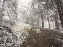 Berglandskap i Maj som går skogen till den Diham stugan Arkivfoto