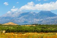 Berglandskap med den olivgröna kolonin, Kreta Fotografering för Bildbyråer