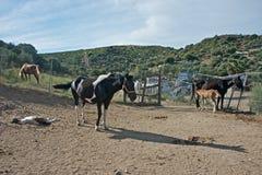 Berglandskap med en grupp av hästar arkivfoton