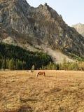 Berglandskap med en häst arkivfoton